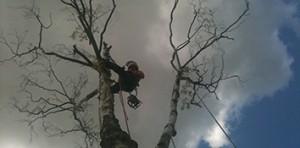 Aerial Tree Work