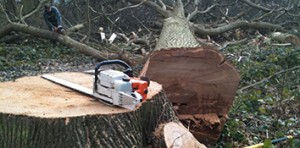 Felling, Hedgecutting & Clearance
